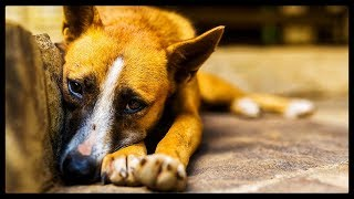 The Current State of Animal Cruelty in China