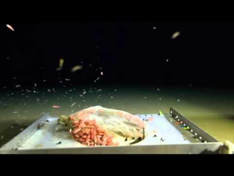Challenger Deep video