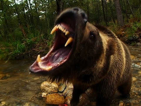 Scary animal attack pictures - photo#29
