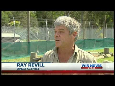 Fraser Island named most dangerous beach in world - WIN Wide Bay 19-09-2012