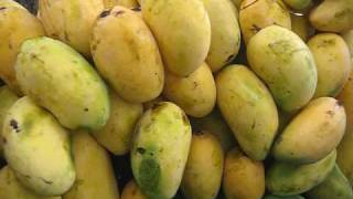 Fruits of Pakistan Mango 14 July 2009 Lahore, Pakistan