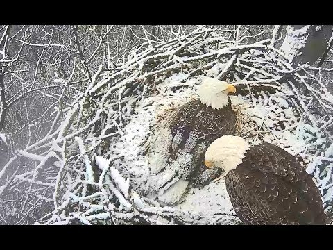Hanover Eagles PA 3 7 18 Liberty & Freedom swap out on a snowy morning