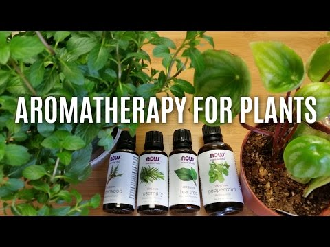 Aromatherapy For Plants ...Sort Of.