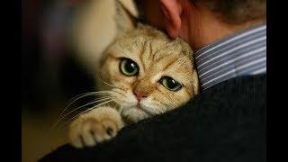 Котёнок пришёл к одинокому мужчине и исполнил его мечту