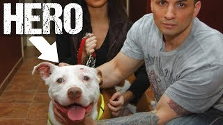 10 Animals that Saved Owner's Lives