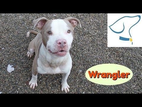 Wrangler: Lucas County Canine Care & Control
