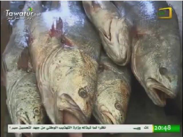 في انواذيبو يزداد إقبال الناس على لحوم الأسماك في الشهر الكريم - تقرير قناة الموريتانية