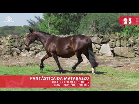 Lote 25 - Fantástica da Matarazzo