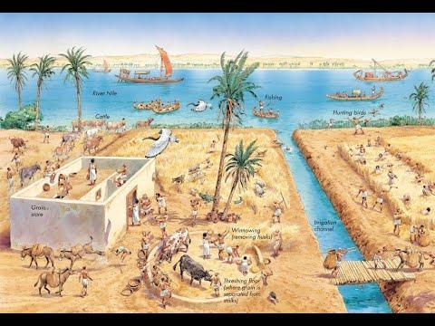 Вопрос: Как называется высокий тростник, растущий по берегам Нила?