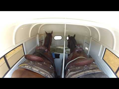 HORSES RIDING IN TRAILER TO EQUESTRIAN CENTER