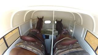 Video HORSES RIDING IN TRAILER TO EQUESTRIAN CENTER download MP3, 3GP, MP4, WEBM, AVI, FLV Januari 2018