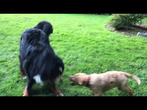 Crosby and Diesel morning play