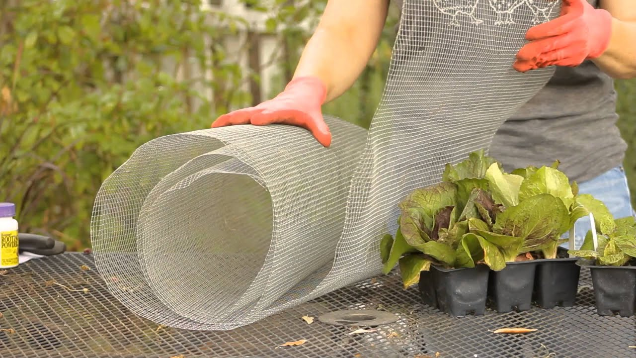 How to keep rabbits away from lettuce garden space youtube - How to keep rabbits out of a garden ...