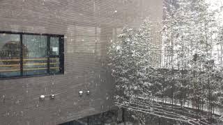 Snowy Gwanggyo Pureunsup Library 눈오는 광교푸른숲도서관