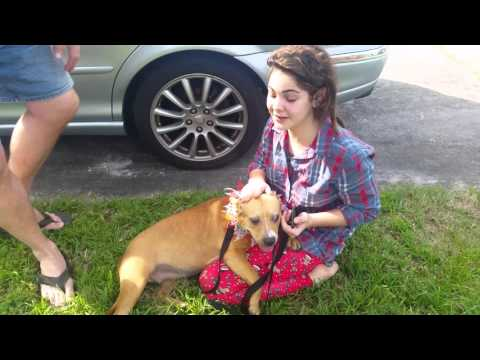 Watch daughter's reaction to surprise puppy