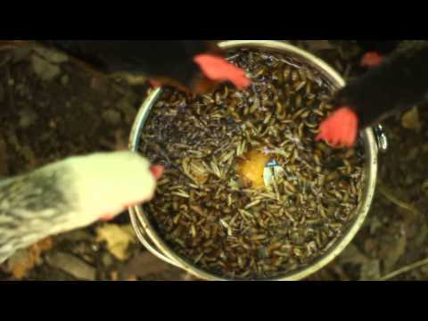 What Is The Worms Being Found In Purina Dog Food