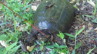 Turtle Trapping Part1