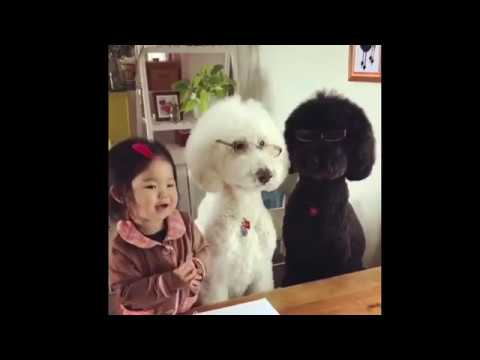 the best funny  Cats and Dogs