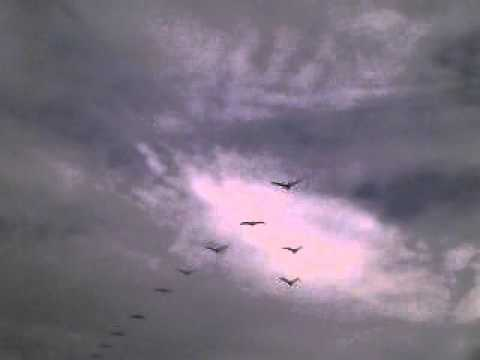 look up in the sky ! its superman ,its a plane ! no, its birds !