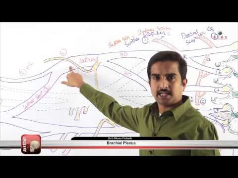 Brachial Plexus Part - 3 ( gims medical video lectures )