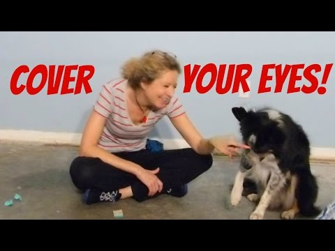Teach Your Dog to Cover His Eyes