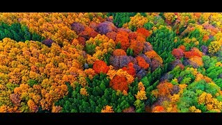【ドローンで4K空撮】紅葉2017 群馬県・吾妻渓谷・榛名山