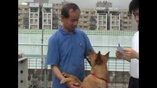 tkpss的[校園記者x多媒體小組] TKP Doggie.相片