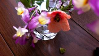 Flower Opening time-lapse photography ムスメが摘んできた花のツボミ...
