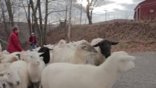 Growing Maine - Stoneheart Farm
