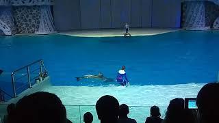 """Выступление дельфинов. Шоу """"Тайна четырех океанов"""""""