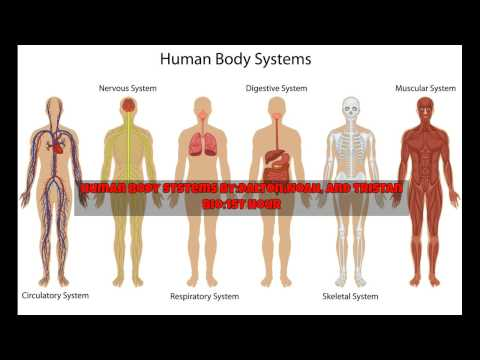 Body Systems 1st hour Bio Dalton,Noah, and Tristan