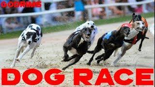 Amazing Dogs Race in Saudi Arabia