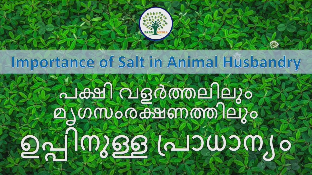 importance of animal husbandry