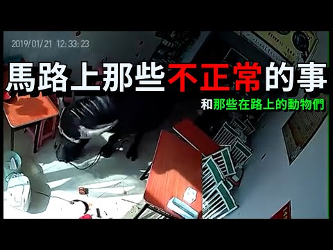 台灣三寶 | 馬路上那些不正常的事 |  | 台灣車禍