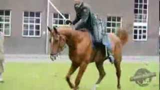 Horsey (Reünie veteranen Amersfoort)