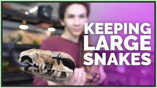 what-s-it-like-keeping-big-snakes