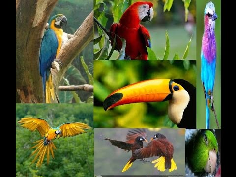 Selva tropical : Flora y Fauna Jungla - Documental Completo