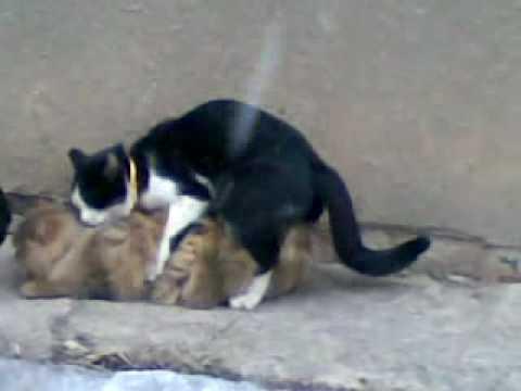 секс знакомства мартовский кот.
