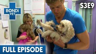low-sugar-puppy-s03e09-bondi-vet