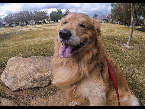 New Years Eve Doggo Walkies   Oshies World