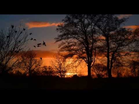 Nature Sounds - Forest birds 4 Hours of tranquil forest atmosphere