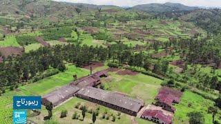 مصنع كونغولي ينتج ويصدر الشاي برغم المخاطر الأمنية وتذبذب الأجور