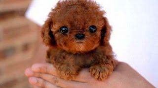 süßester hund