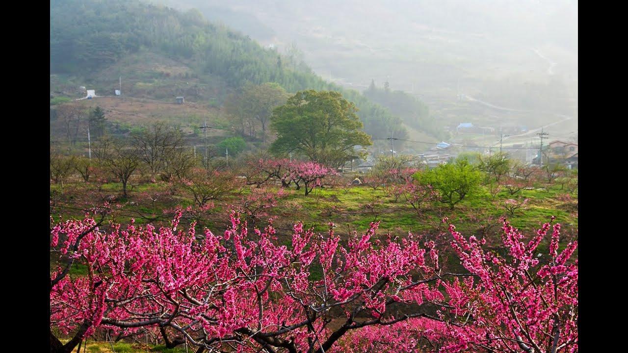 Download 고향의 봄 (The spring of hometown)