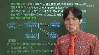 [2017 E-연계 최종점검 생명과학1] 05강 유전2…