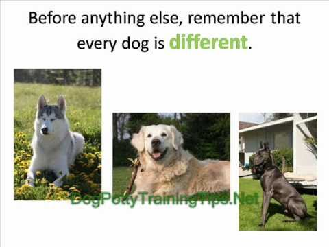 Dog potty training problems and how to overcome them youtube for Dog potty training problems