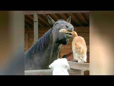 🐪🐐🐕Most UNBELIEVABLE and FUNNY ANIMAL MOMENTS caught on cam 2019