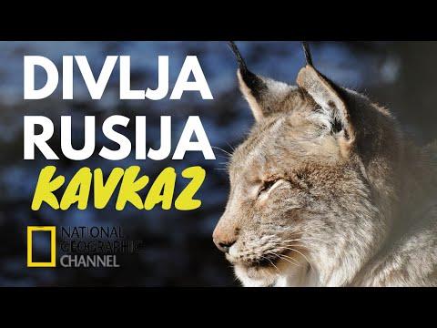 DIVLJA RUSIJA, VELIKA GRANICA, Dokumentarni Film Sa Prevodom, Nacionalna Geografija from YouTube · Duration:  46 minutes 56 seconds