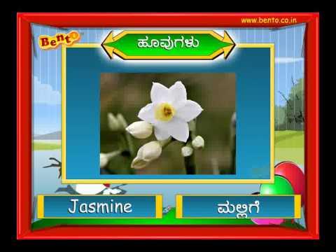 FLOWERS in Kannada Preschool Learning