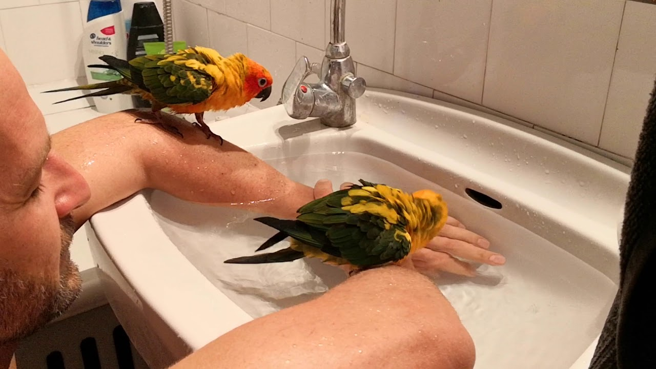Tablettákat api san férgek - hogyan kell kezelni a bélférgek egy papagáj - wien.hu